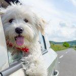 ubezpieczenie dla psów i kotów pies na wakacjach